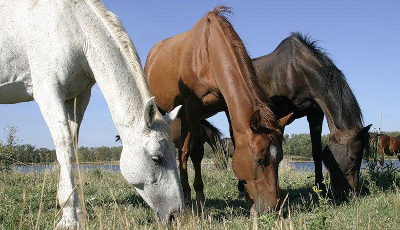 trzy-konie