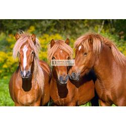 C-103959 HORSE FRIENDS PUZZLE 1000 ELEMENTÓW