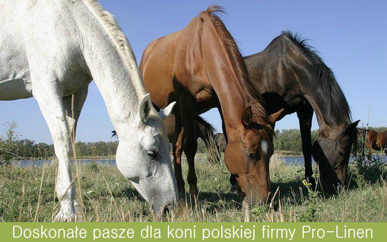 Pasze dla koni Pro-Linen